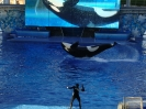 Sea World Orlando_13